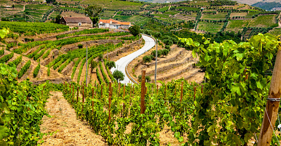 Biking among the vineyard terraces of the Douro Valley, Portugal. Flickr:mat's eye