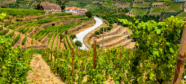Douro Valley Wine and E-Bike Tour