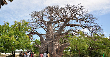 Baobab Tree, South Africa. Photo via Flickr:Amila Tennakoon