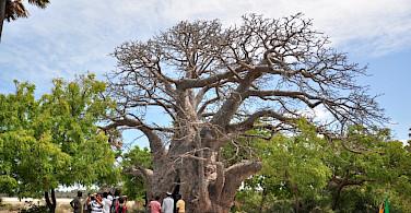 Baobab Tree, South Africa. Photo via Flickr:Amila Tennakoon