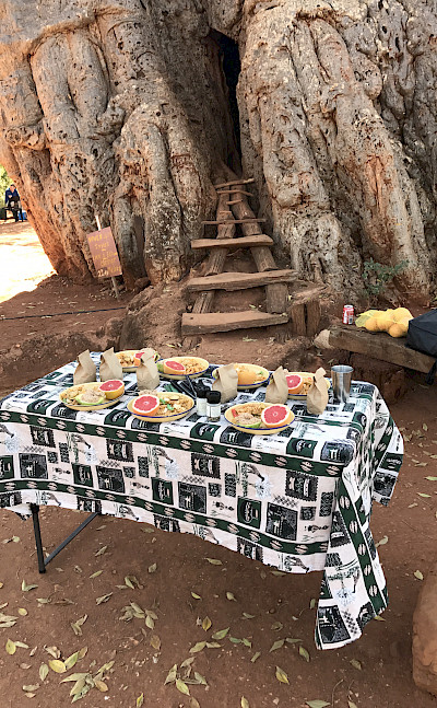 Hennie and TripSite group's lunch next to an old baobab tree!