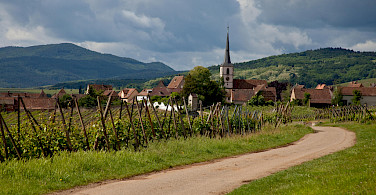 Biking towards Mittelbergheim, Alsace, France. Photo via Flickr:Allan Harris