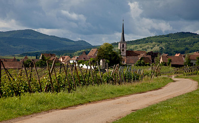 Biking towards Mittelbergheim, Alsace, France. Flickr:Allan Harris