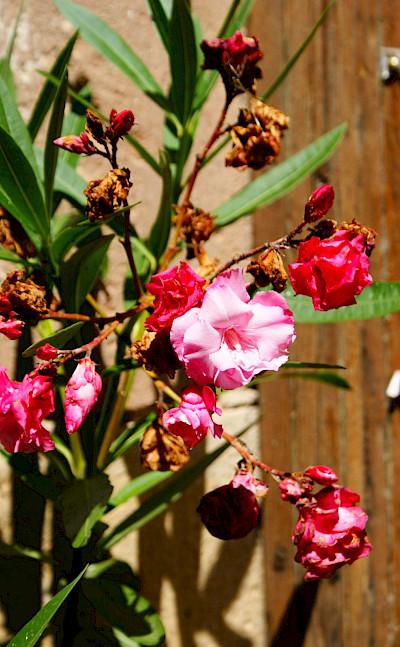 Flowers brighten Cordes-sur-Ciel in department Tarn, France. Photo via Flickr:Stephane Goldstein