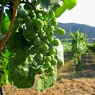 Vineyards in Dürnstein, Wachau, Austria. Flickr:Brynjar Viggosson