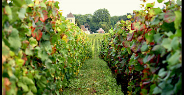 Vineyards and chateaux in Burgundy, France. Photo via Flickr:Magalita B.