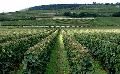 Vineyards abound at the Côte de Beaune in Burgundy, France. Flickr:Megan Cole