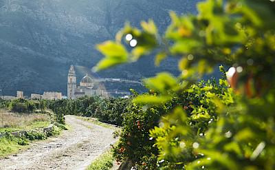 Biking through Valencia's lush fruit-filled lanscapes.