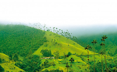 Cocora Valley is part of the Los Nevados National Natural Park in Quindío, Colombia. Photo via Katja Hasselkus