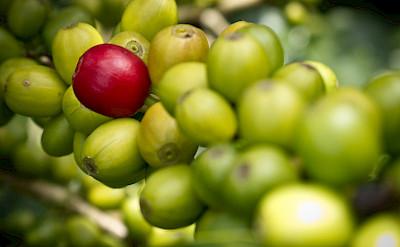 Coffee beans galore in Colombia. Photo via Flickr:Juan Camilo Trujillo