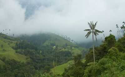 Valle de Cocora in the Coffee Triangle of Colombia. Flickr:McKay Savage