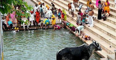 Bathing in Rajasthan, India. Photo via Flickr:Fulvio Spada