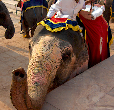 Elephant ride awaits in Jaipur, Rajasthan, India. Photo via Flickr:John Haslam