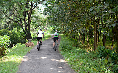 Share the road in Kerala, India.