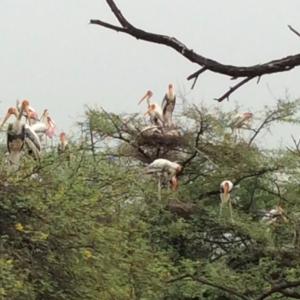 Bird sanctuary Keoladeo Ghana Nat. Park