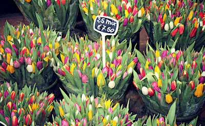 Tulips for sale in Amsterdam, North Holland, the Netherlands. Photo via Flickr:Meg Marks
