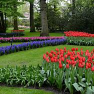 Flowers galore at the Keukenhof, Lisse, South Holland, the Netherlands. Photo via Flickr:Olga