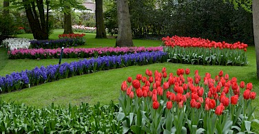 Flowers galore at the Keukenhof, Lisse, South Holland, the Netherlands. Photo via Flickr:Olga