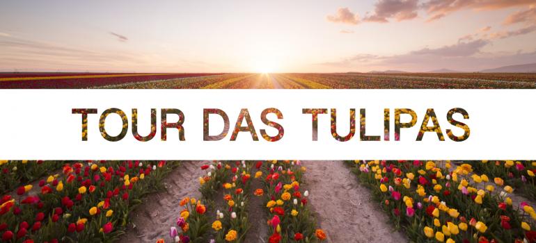 Tulip Tours
