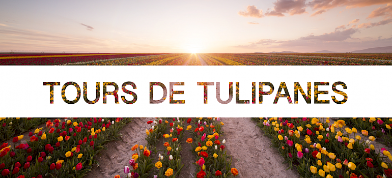 Tours de Tulipanes