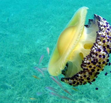 Under the sea on Mljet Island, Dalmatia, Croatia. Photo via Flickr:wrda