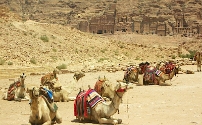 Resting camels at Petra in Maan, Jordan. Photo via Flickr:Mi. Ma.
