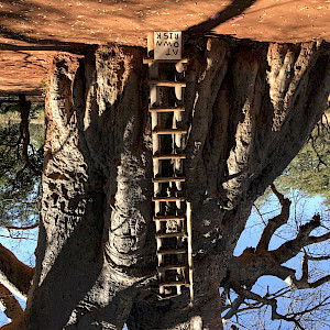 2000 year old Baobab tree