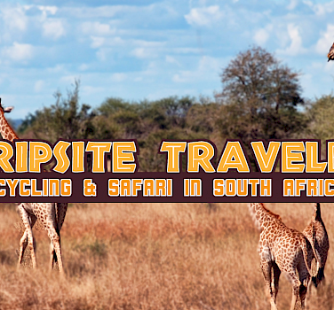 Tripsite Traveler: Cycling & Safari in South Africa