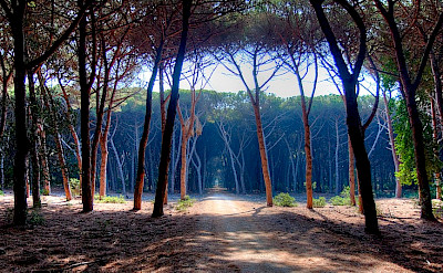 Biking in Orbetello on the Tuscan Coast, Italy. Photo via Flickr:Andreas Artorati