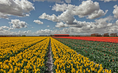 Holland is famous for its tulips. ©holland fotograaf
