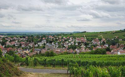 Biking past vineyards in Alsace, France. Flickr:valentinr