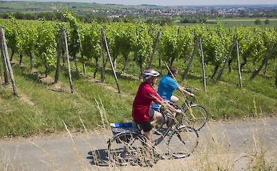 Biking the Mainz to Strasbourg Bike & Boat Tour. ©TO