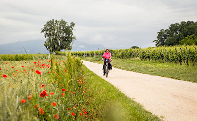 Biking Innsbruck to Venice Bike Tour. ©Photo via TO