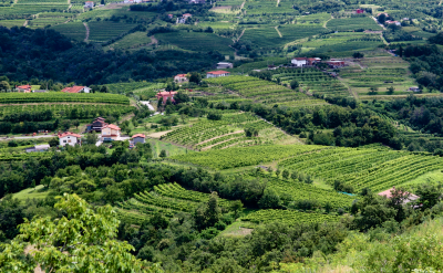 The wine country of Brda, Slovenia. Flickr:Matt B