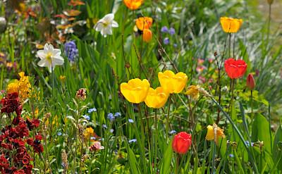 Flowers in England. Flickr:Random_fotos