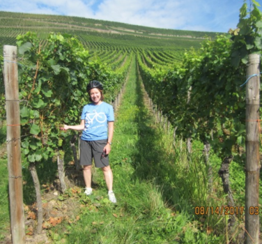 Vineyard in Germany along the Mosel River