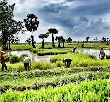 Siem Reap to Saigon