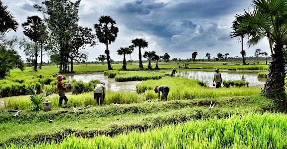 Rice paddies near Siem Reap, Cambodia. Photo via Flickr:ND Strupler 13.361785, 103.859901