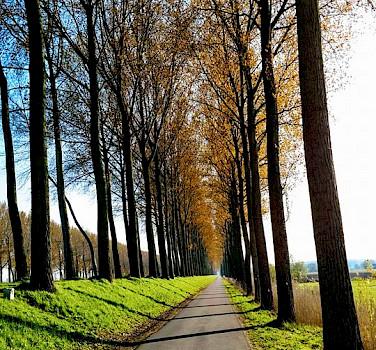 Bike path in Bruges