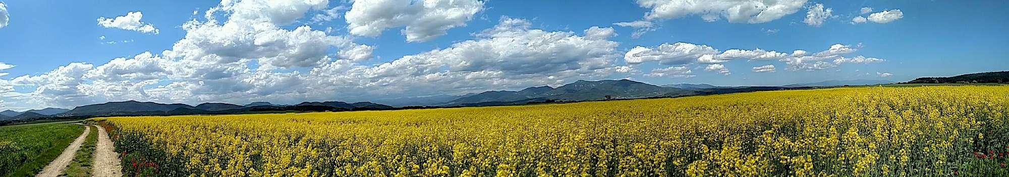 Flower field in Spain