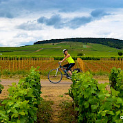 Burgundy guided bike tour Photo