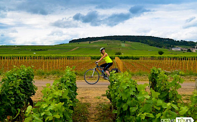 Cycling amid the lush vines and the promise of wine in Burgundy, France.