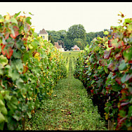 Vineyards and chateaux in Burgundy, France. Flickr:Magalita B