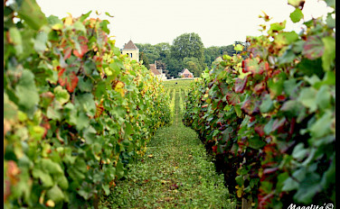 Vineyards and chateaux in Burgundy, France. Photo via Flickr:Magalita B