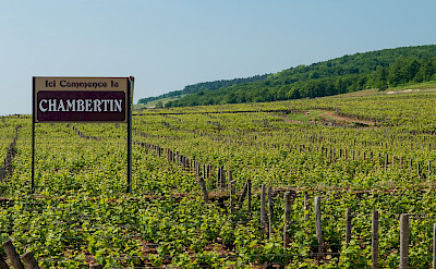 Entering the vineyards of Chambertin in Burgundy, France. Flickr:Anna & Michal