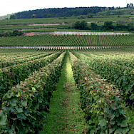 Côte de Beaune is home to many great Burgundy wines. Flickr:Megan Cole