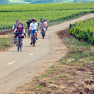 Cycling through the vineyards in Burgundy - one of France's main wine-growing regions.