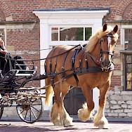 Carriage ride in Middelburg, Zeeland, the Netherlands. Photo via Flickr:Marian van der Weide