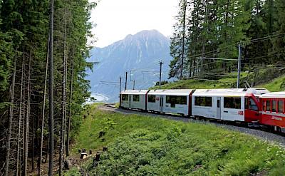 Bernina Pass train in Switzerland. Flickr:Dennis Jarvis