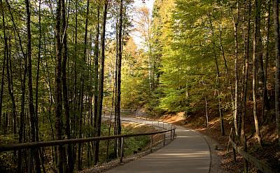 The path up to Neuschwanstein Castle in Hohenschwangau, Germany. Flickr:Luiz Contreira